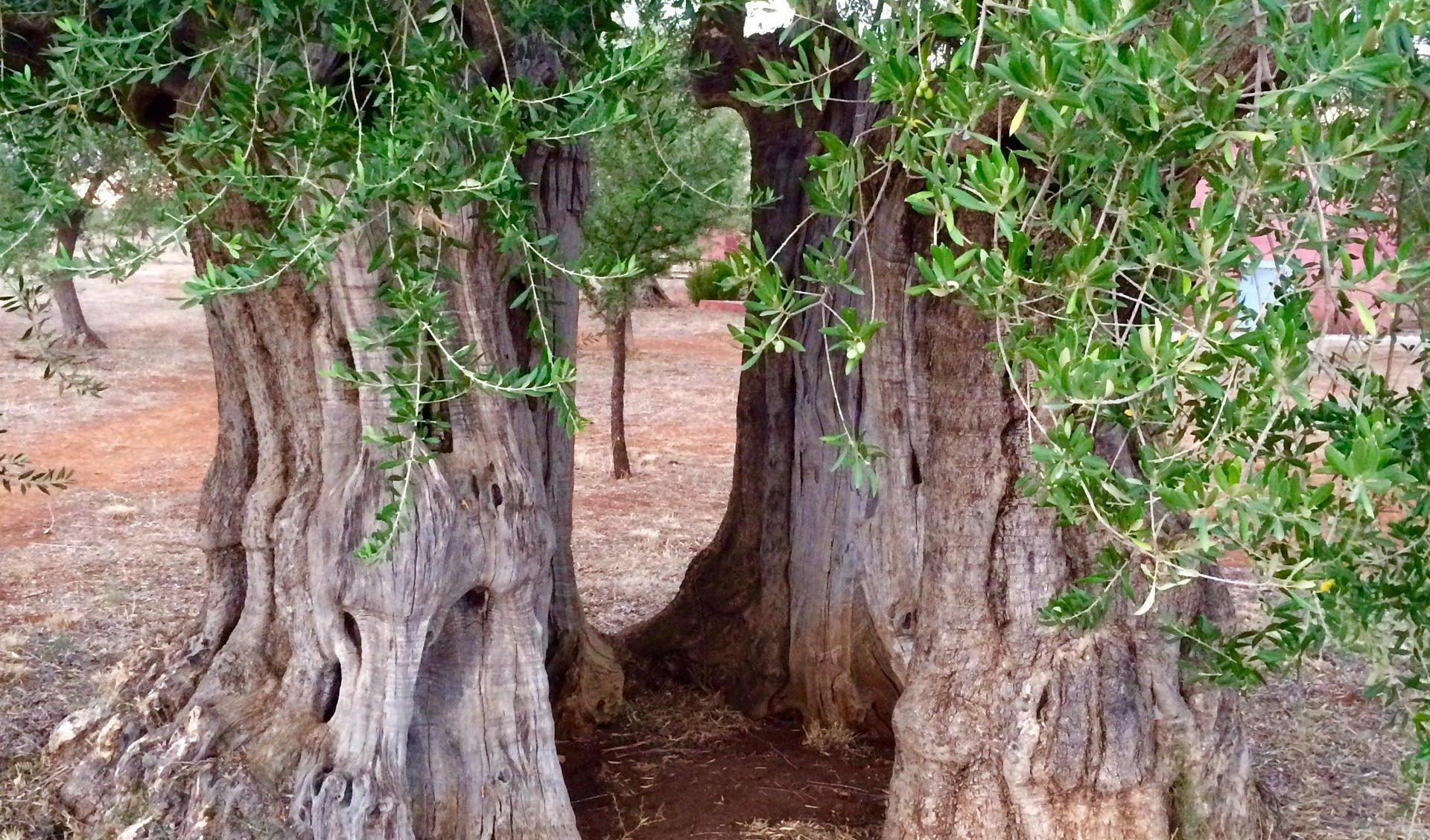 Margo wine routes, Tourism - Itineraries - Greek wine